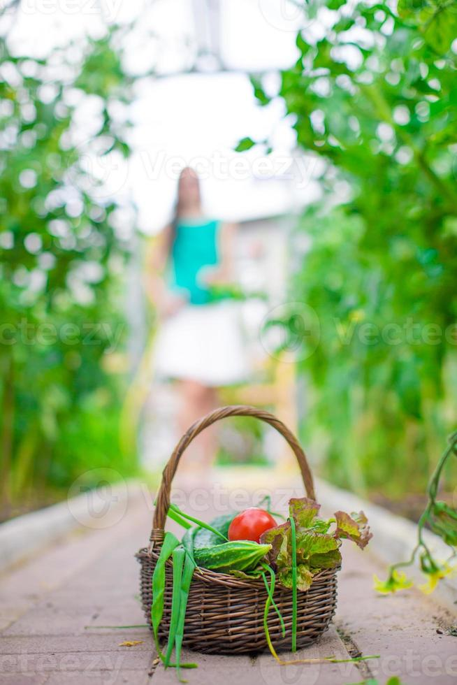 Closeup basket of greenery and vagetables in the greenhouse photo