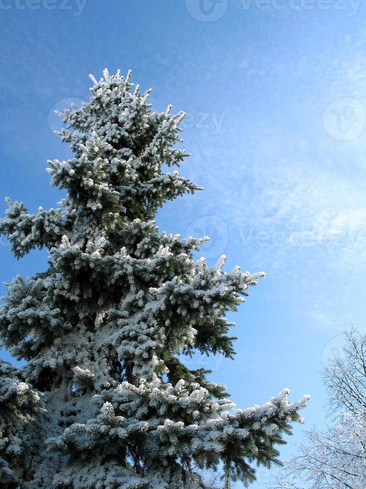arbol de invierno foto