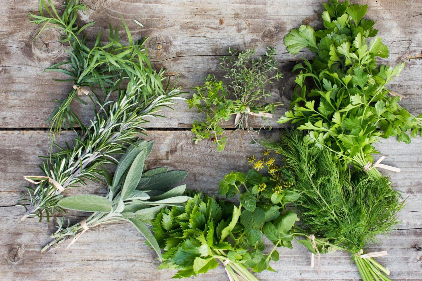 hierbas verdes frescas foto