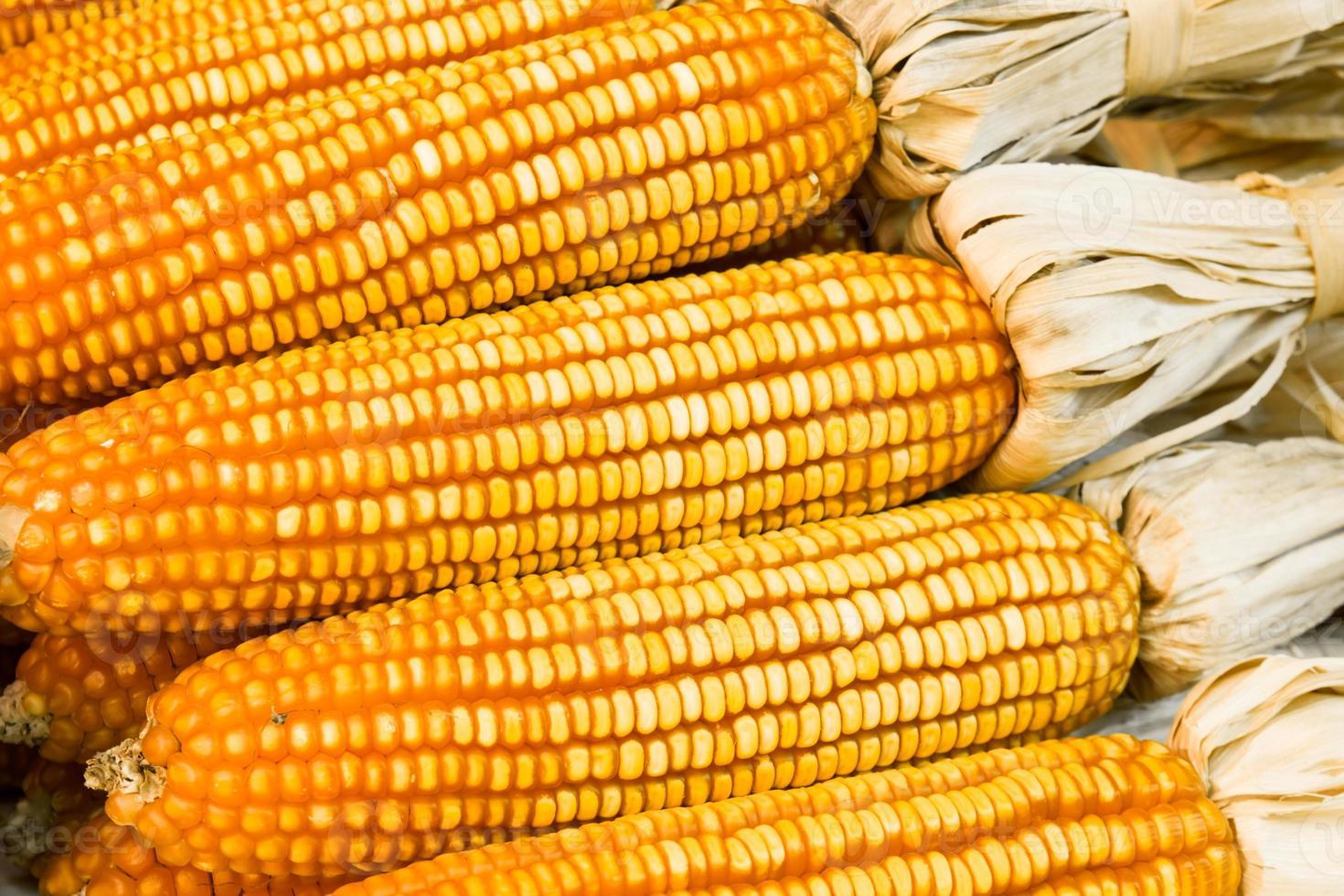 piles of corn photo