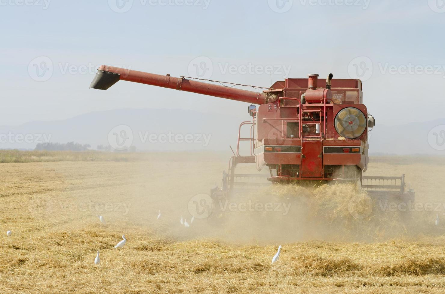 Combine cutting rice in Sacramento. photo