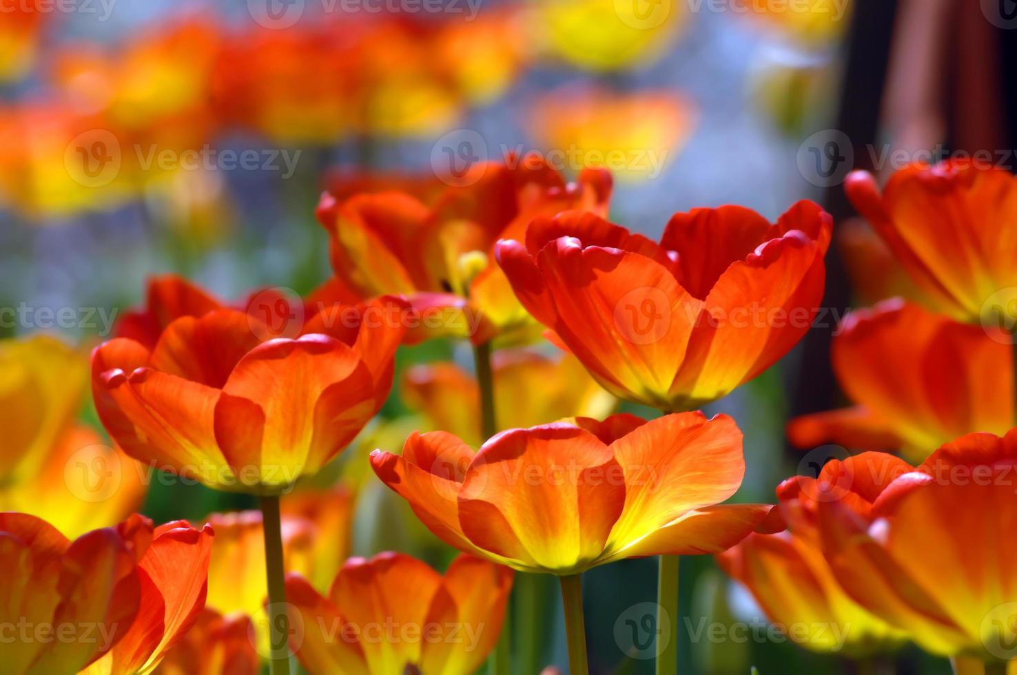 ardiendo con color naranja foto