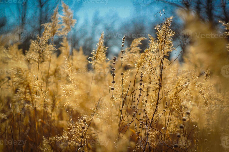 naturaleza foto