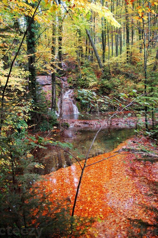 hojas de naranja y colores otoñales en el bosque foto