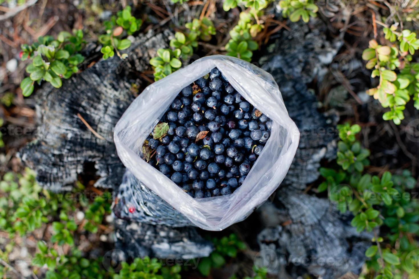 Bag full of blueberries photo