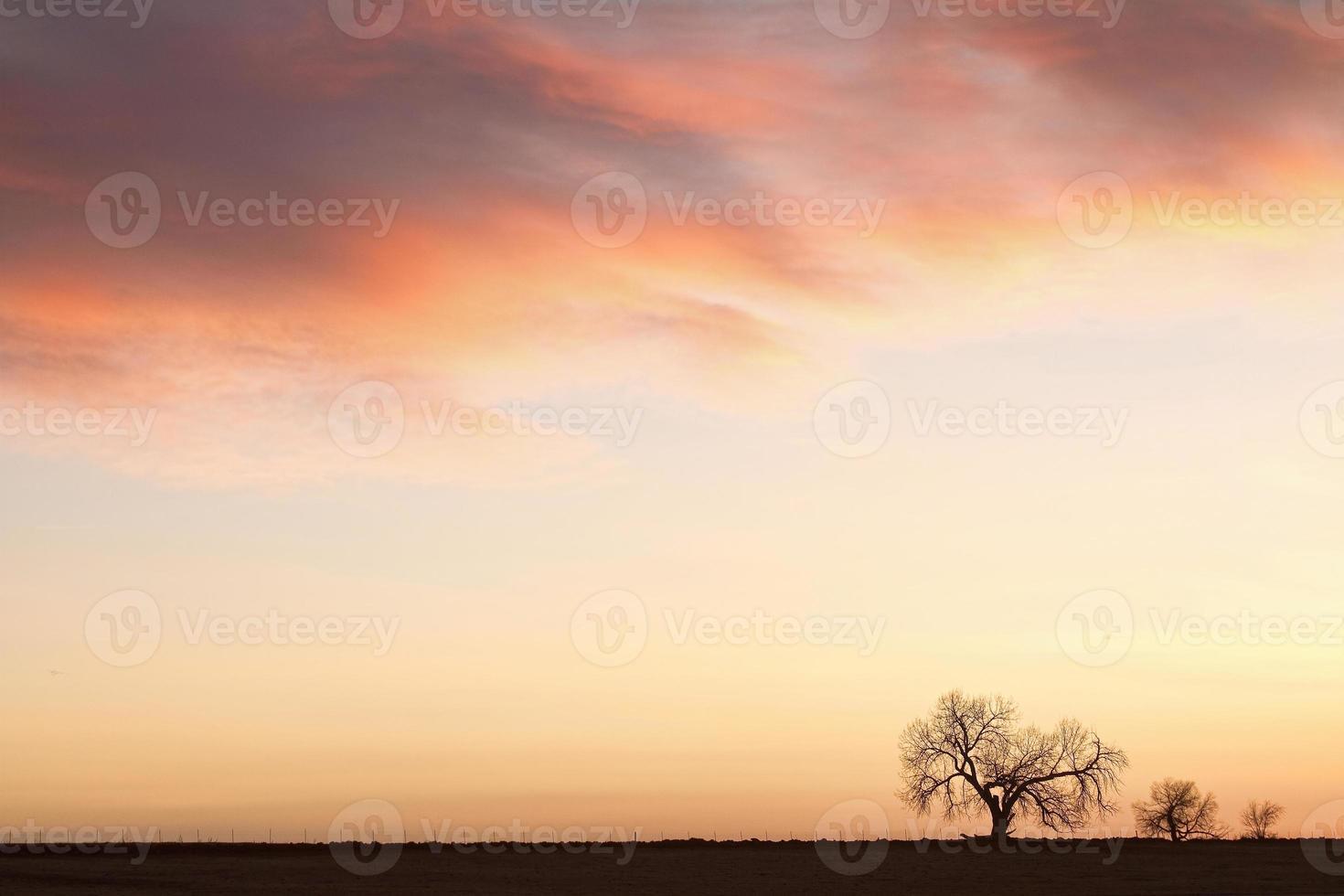 trois arbres lever du soleil ciel paysage photo