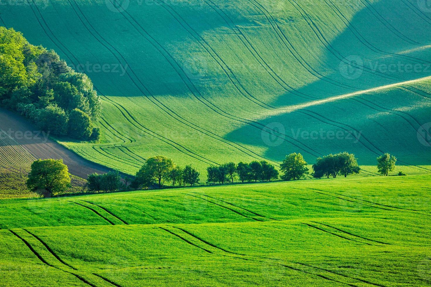 ondulado paisaje de verano de Moravia foto