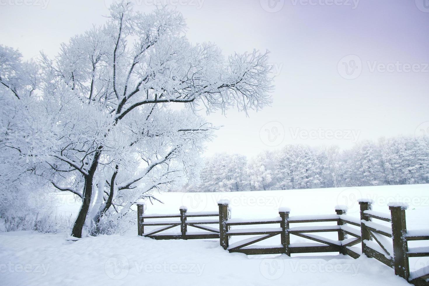 bosque de invierno foto