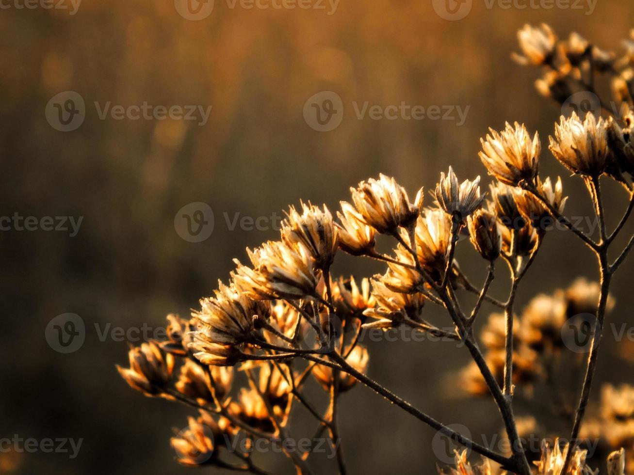 flor de inverno foto
