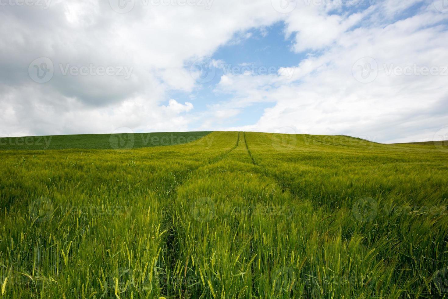 Agriculture Landscape photo