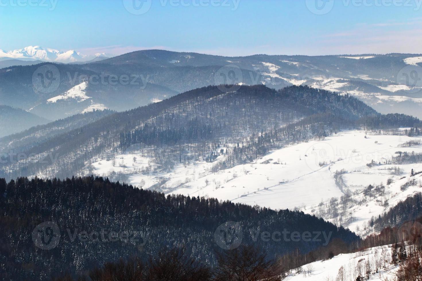 floresta de montanha do inverno foto