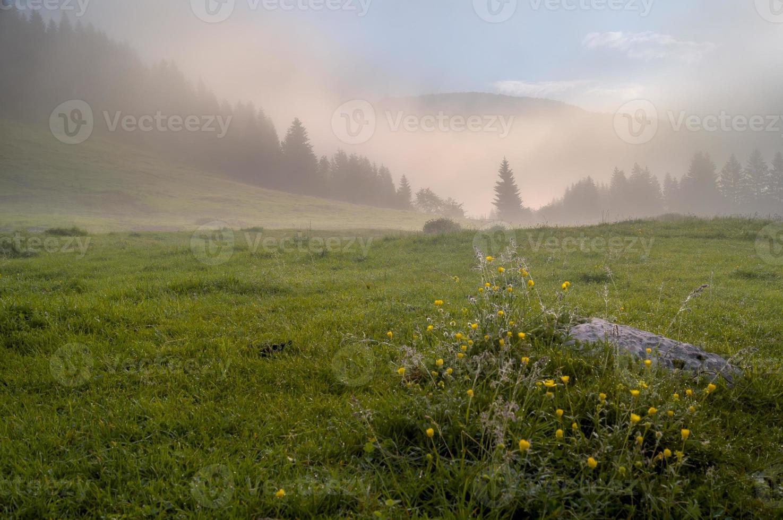 prado alpino en la niebla de la mañana foto