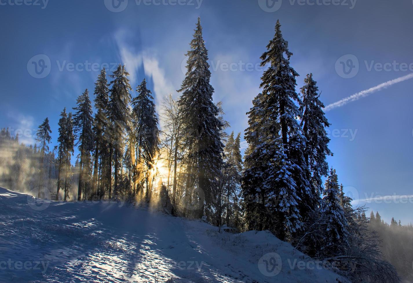 paisagem de inverno na floresta foto