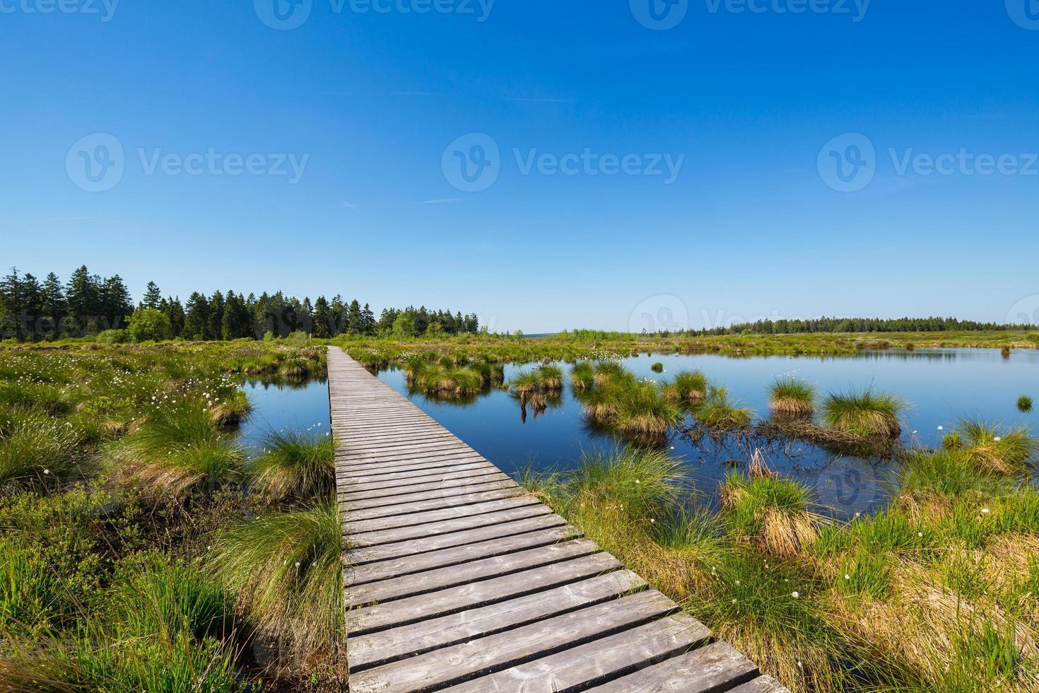 paisagem de pântano de alta fens no verão foto