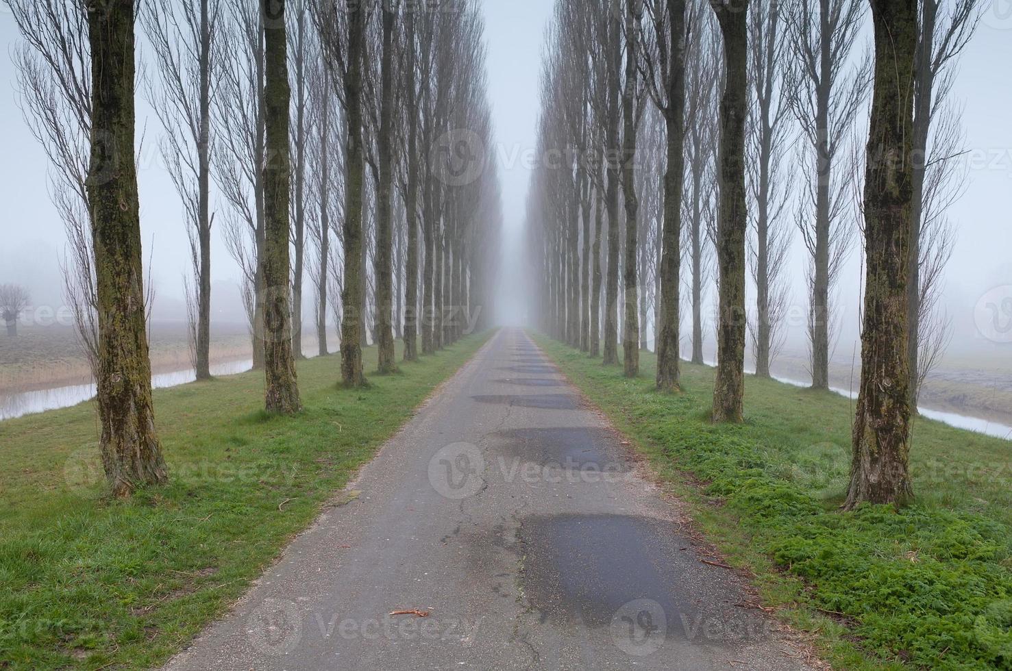 fietsweg tussen boomrijen in mist foto