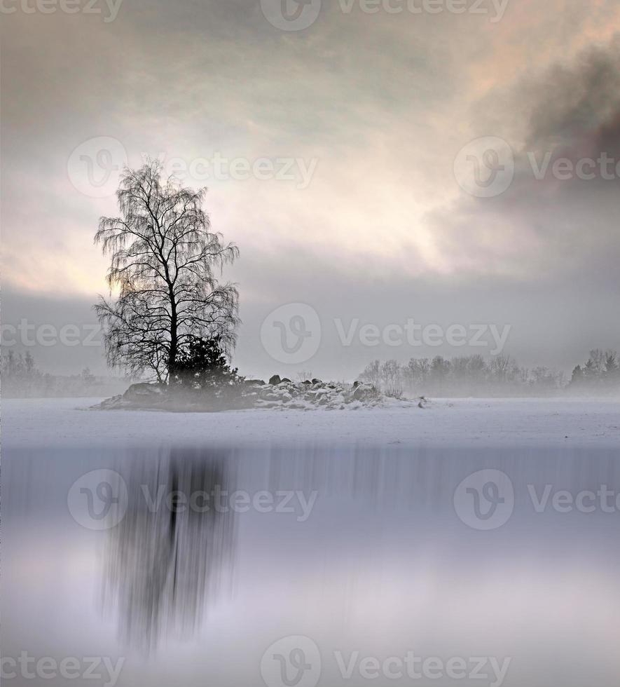 arbre nu dans un paysage brumeux photo