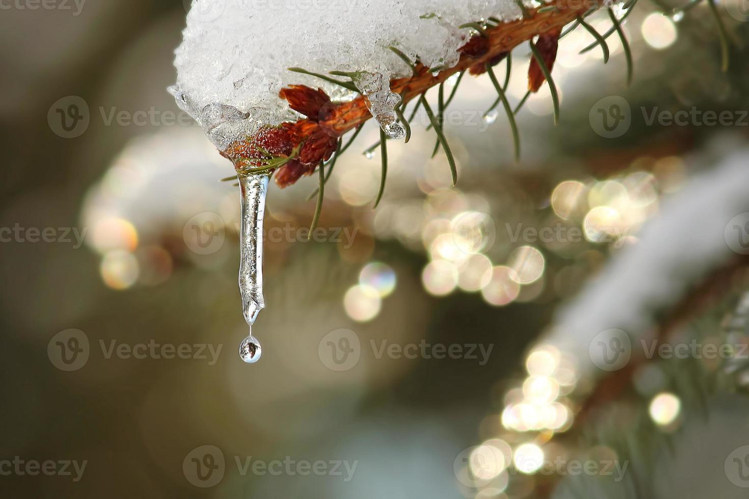 belleza de invierno foto