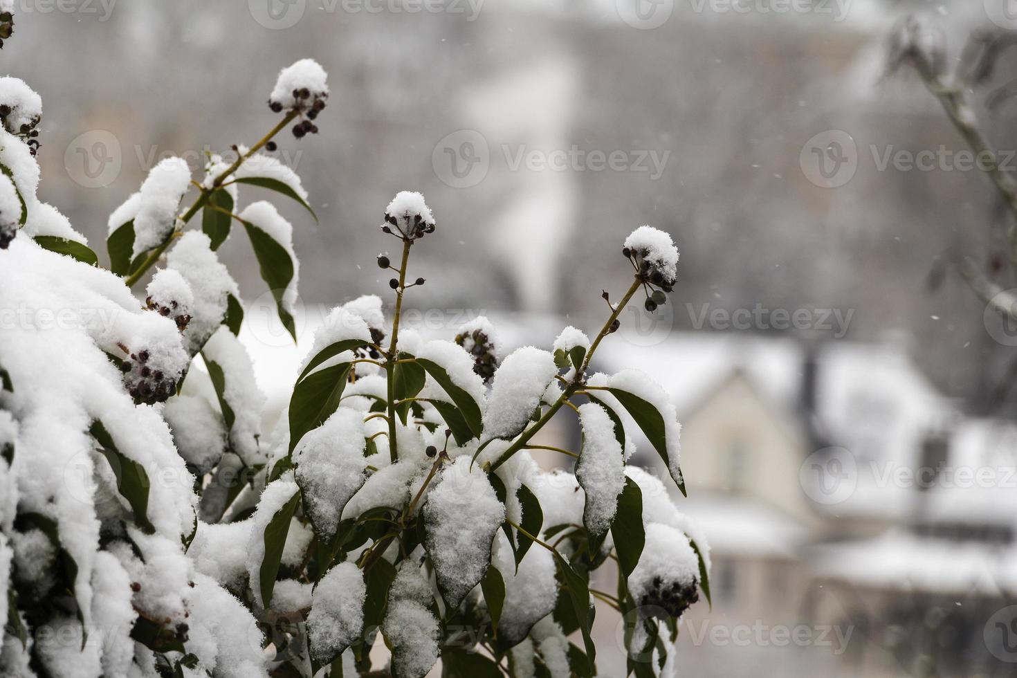 invierno luxemburgo, europa foto