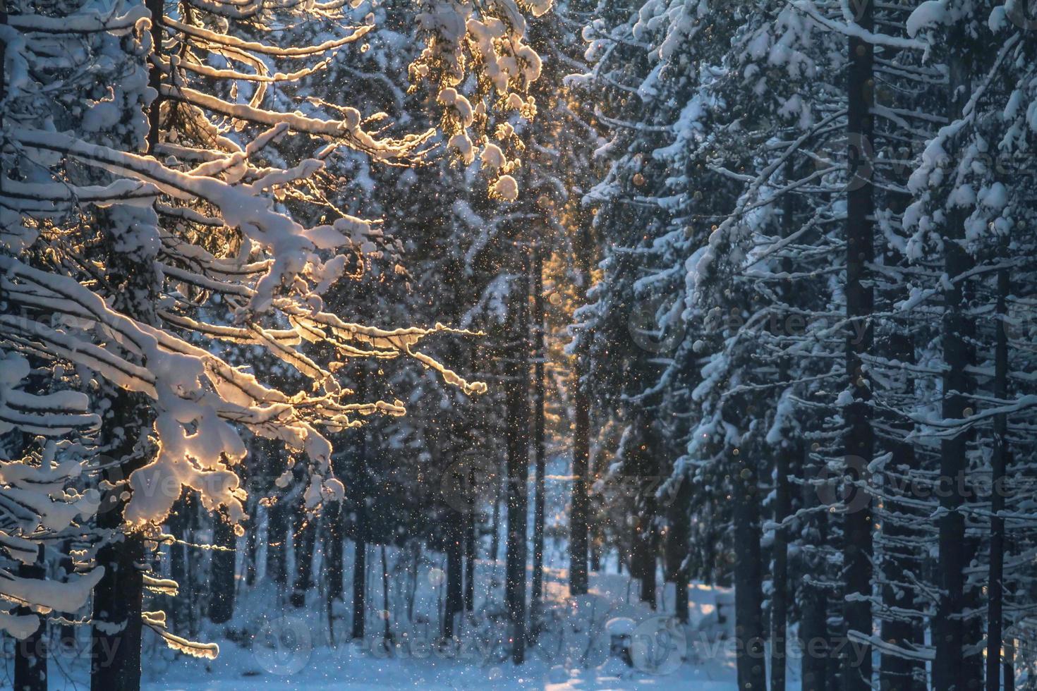 bosque de noche en invierno foto