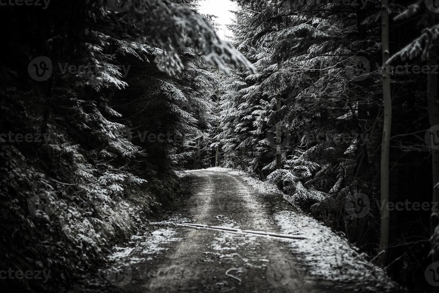 pad in winter bos foto