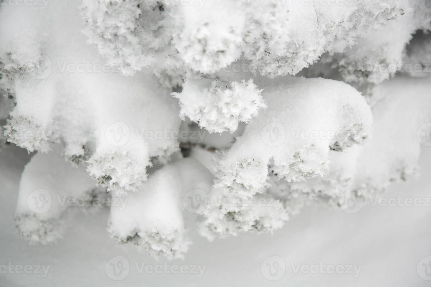 invierno, detalle de plantas cubiertas de nieve foto