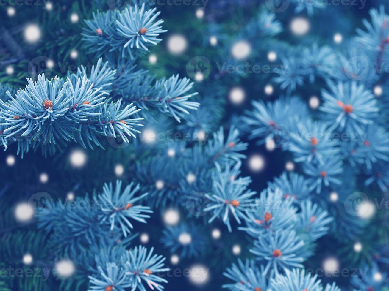 magia de invierno en el bosque foto
