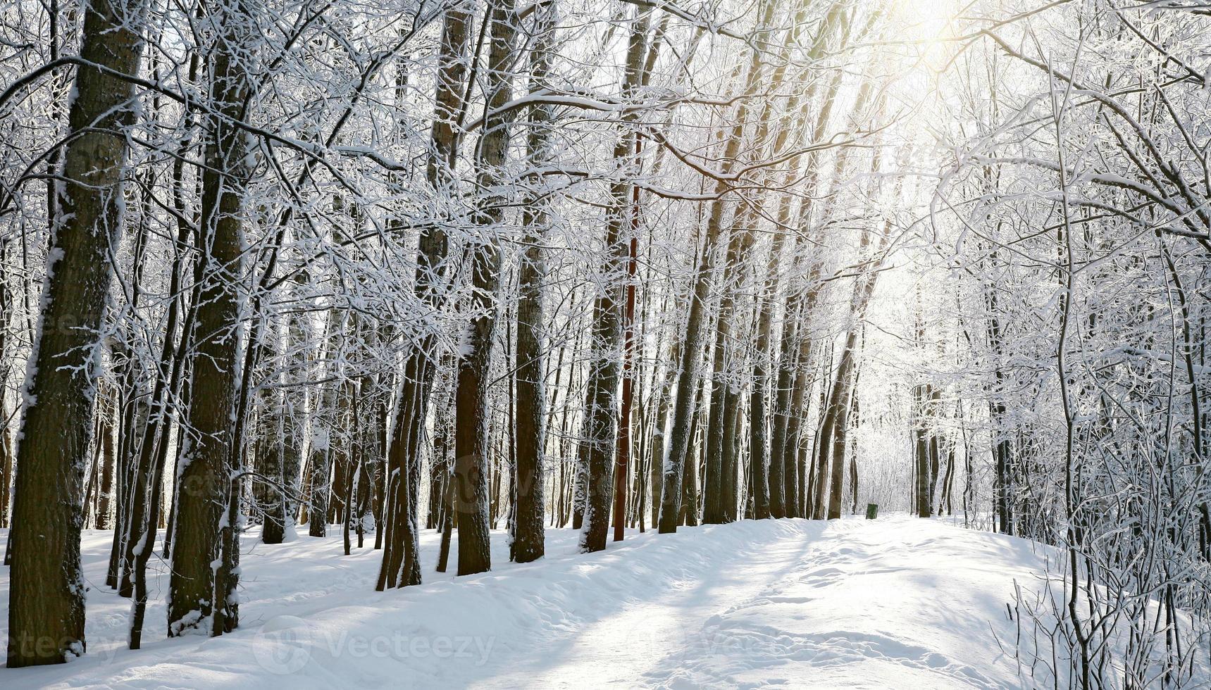 camino en bosque soleado de invierno foto