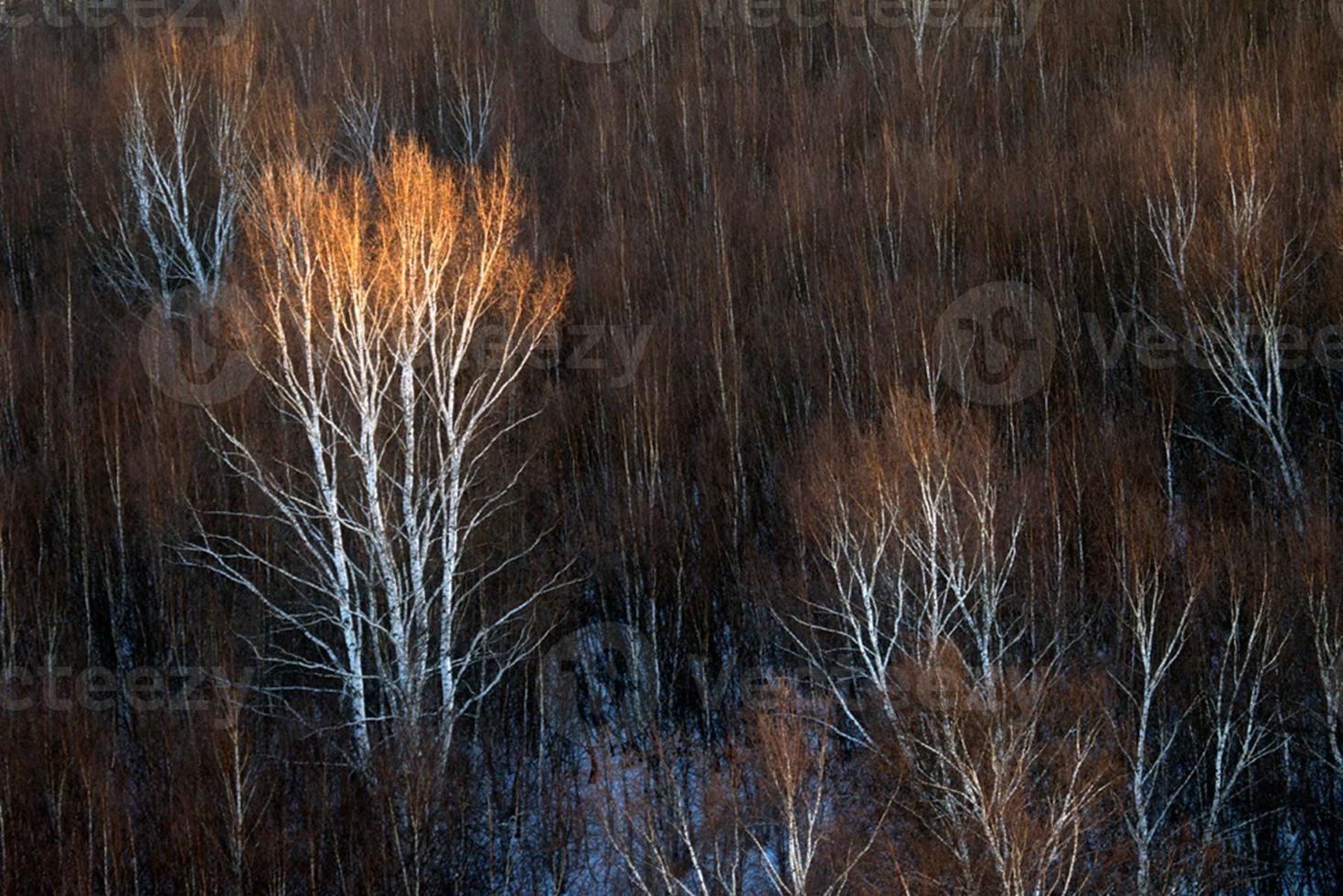 rima de invierno en bashang 19 foto