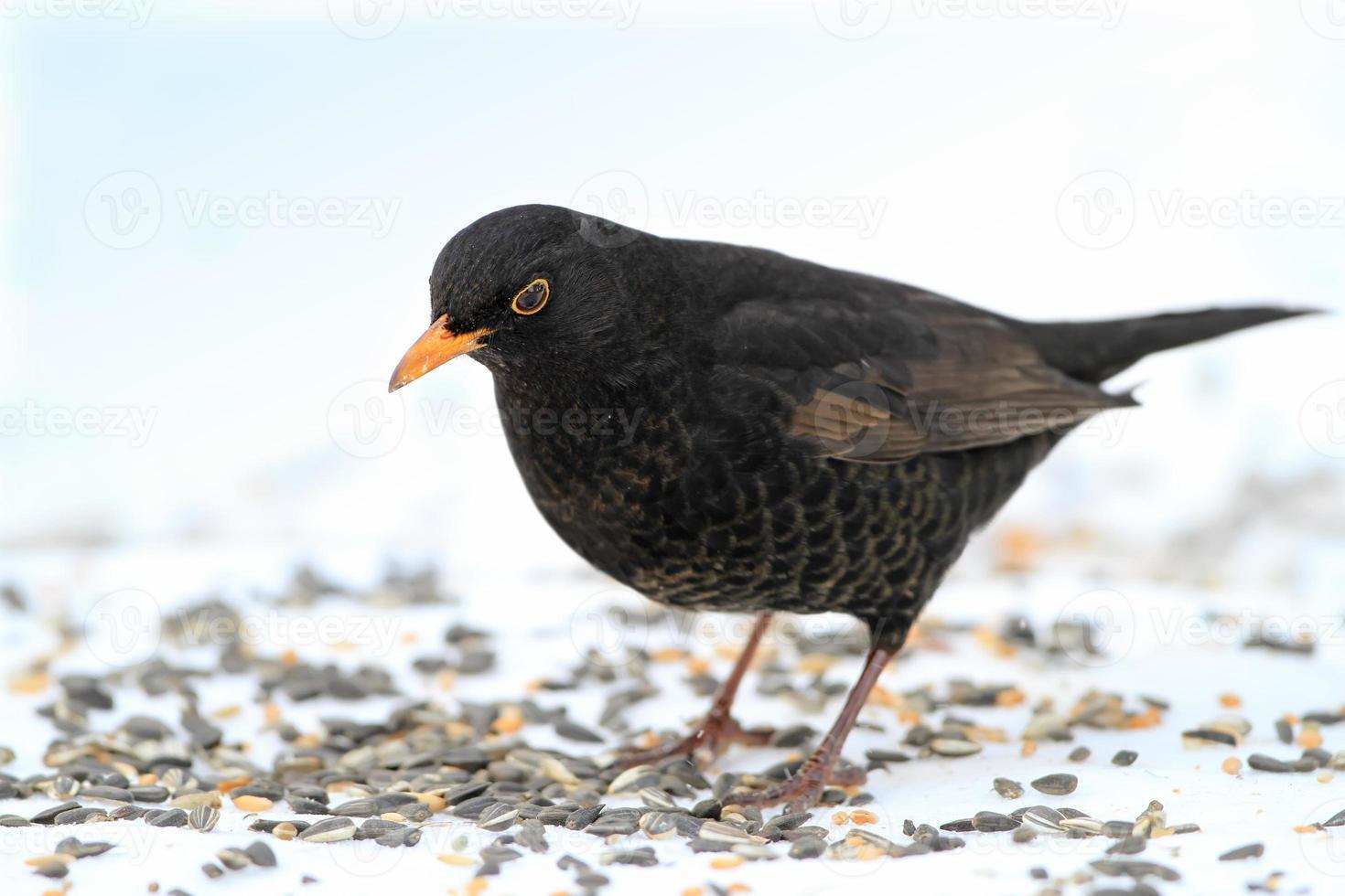 encontrar comida no inverno foto
