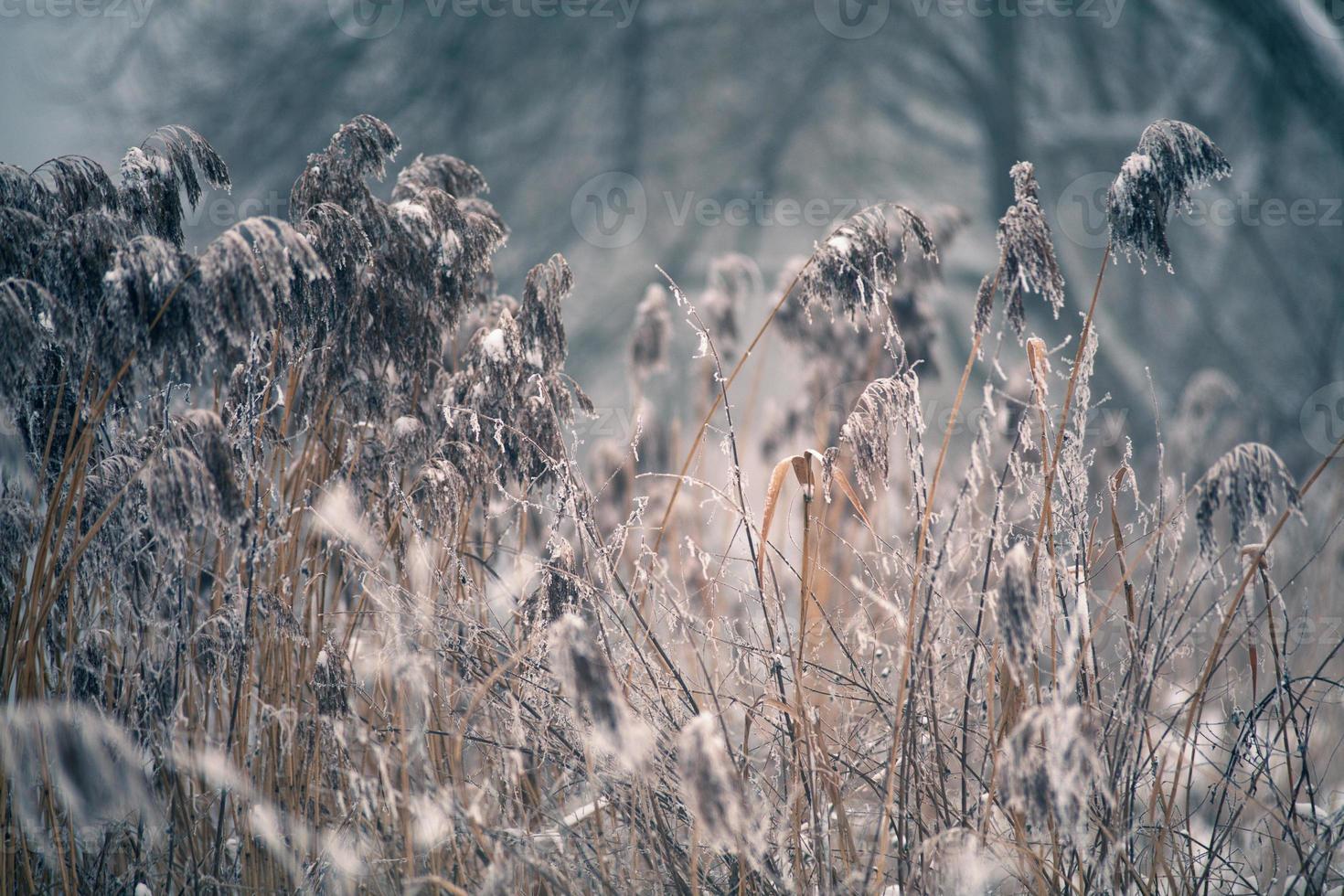 neige et hiver. village de Biélorussie, campagne en hiver photo