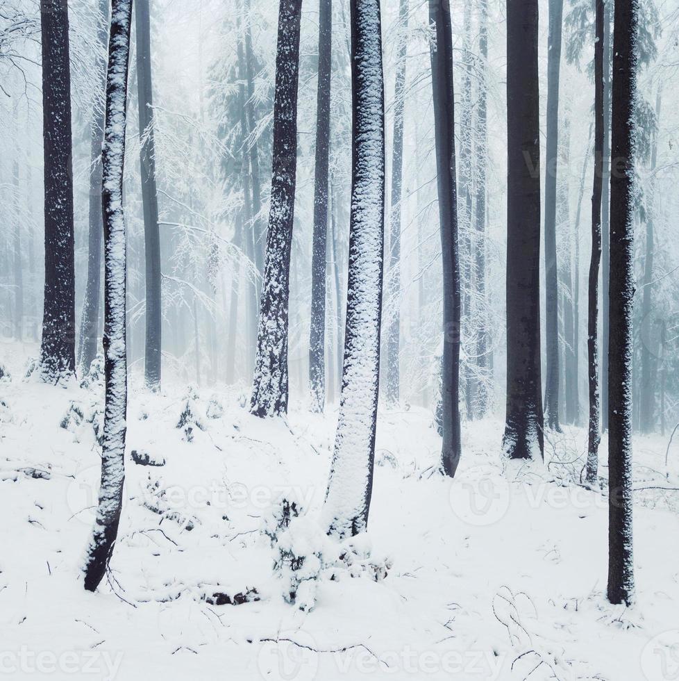 escena del bosque de niebla de invierno foto