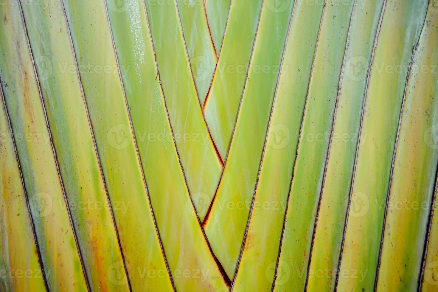 pattern of stems palm Aligned in rows photo