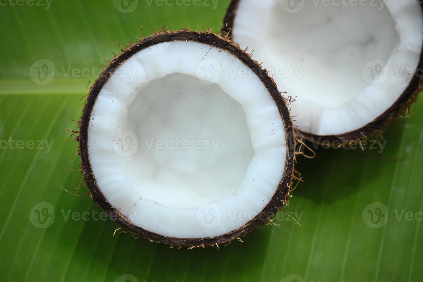 Half Coconut photo