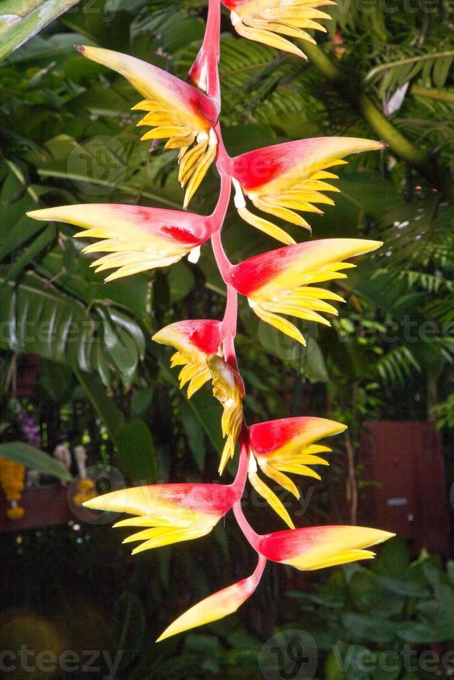 flor de un árbol de plátano en un jardín botánico foto
