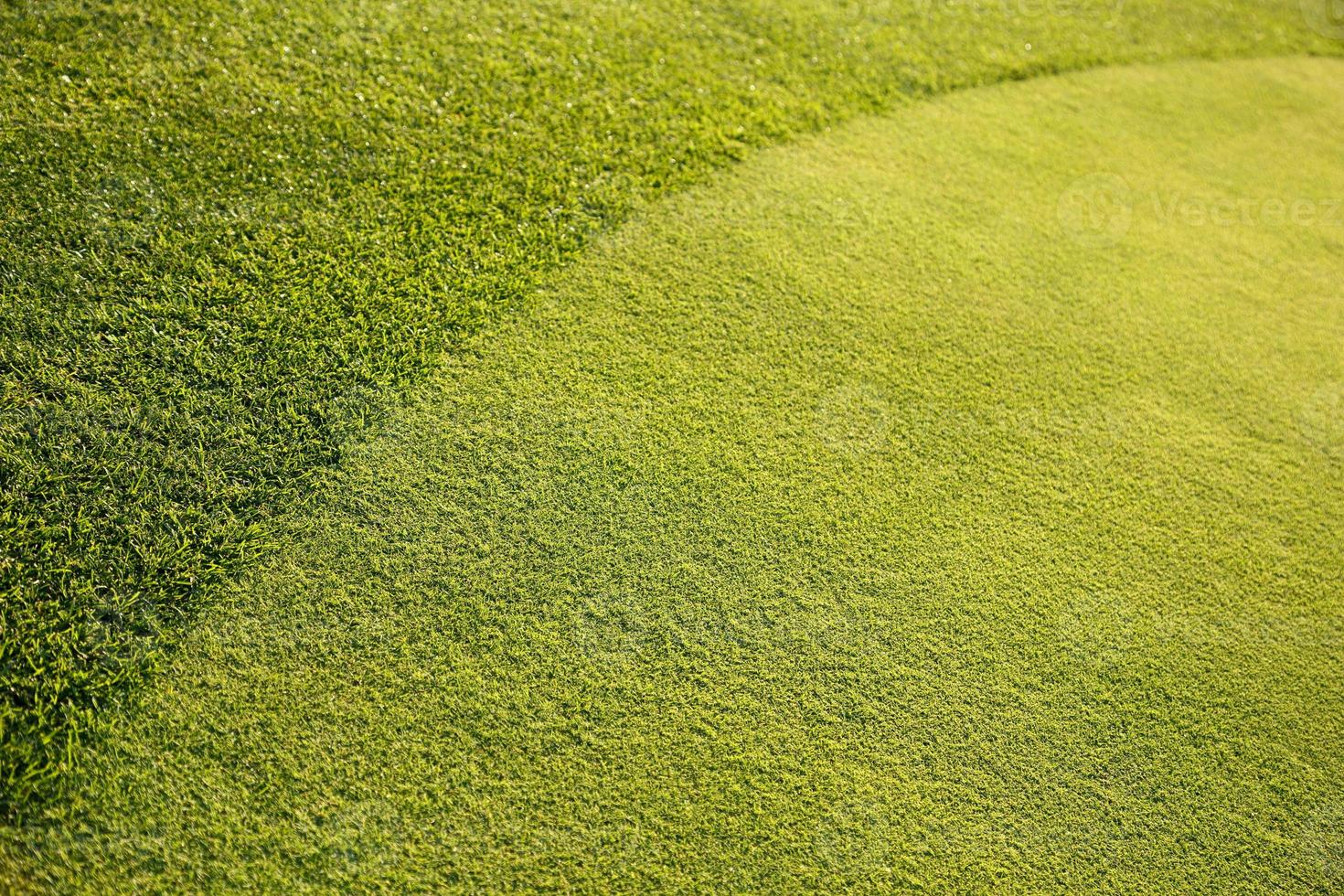 Fondo de hierba verde xxl foto