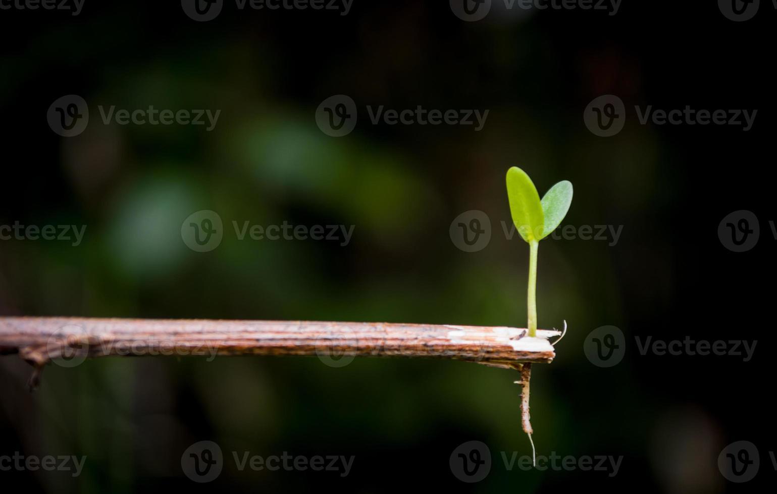 plántulas de plantas foto