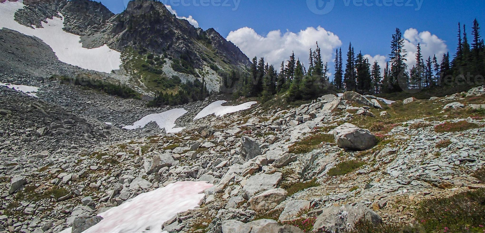Glaciers amongst boulders, pine and snow photo