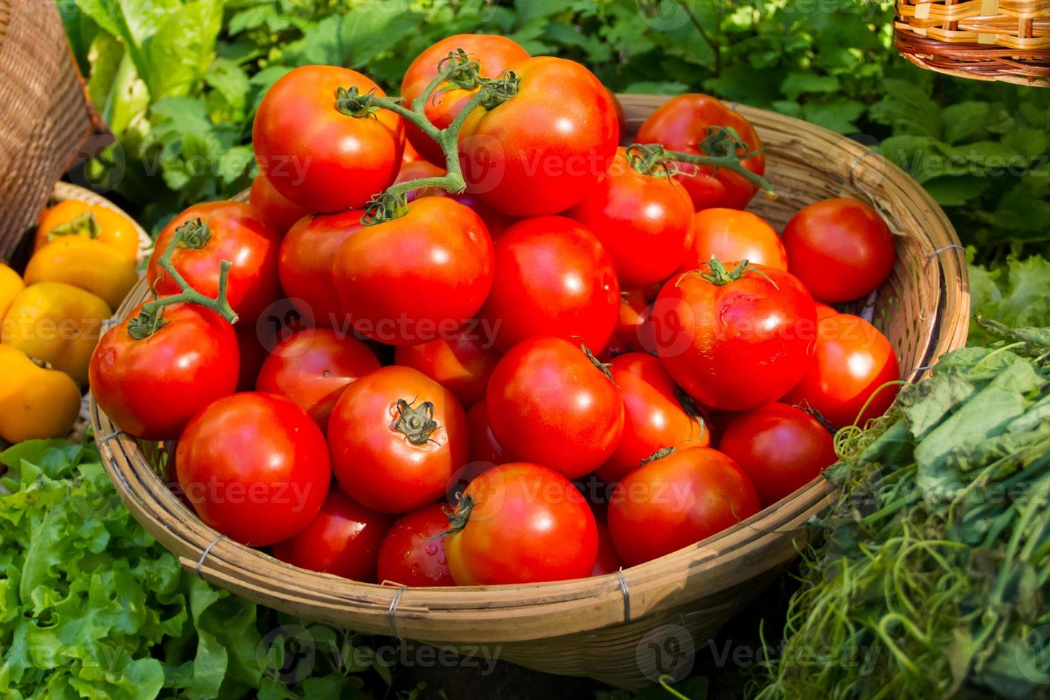 Tomatoes in the basket photo