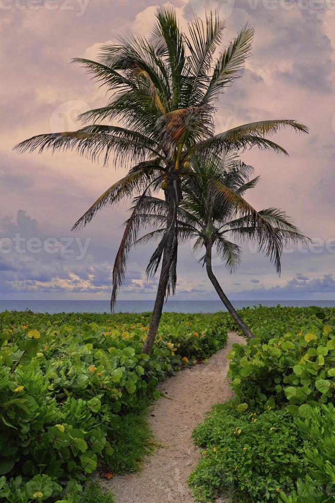 Tropical, empty beach, Miami Beach photo