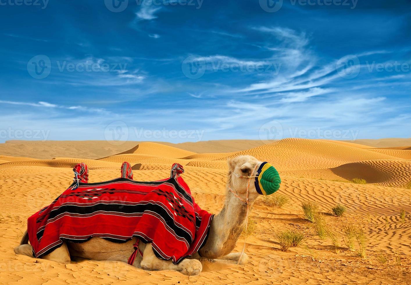 Tourist camel on sand dunes photo