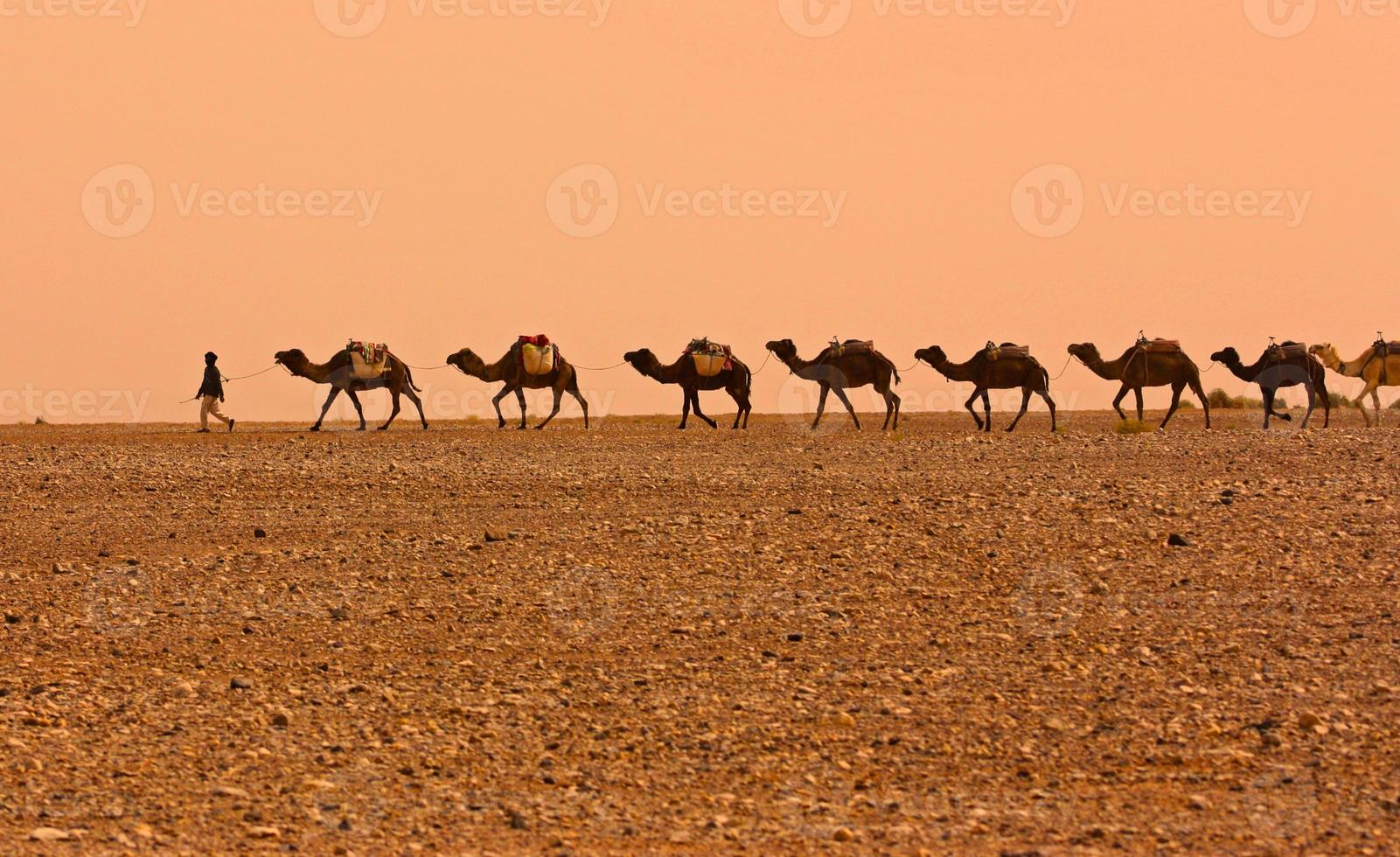 Camel Caravan photo