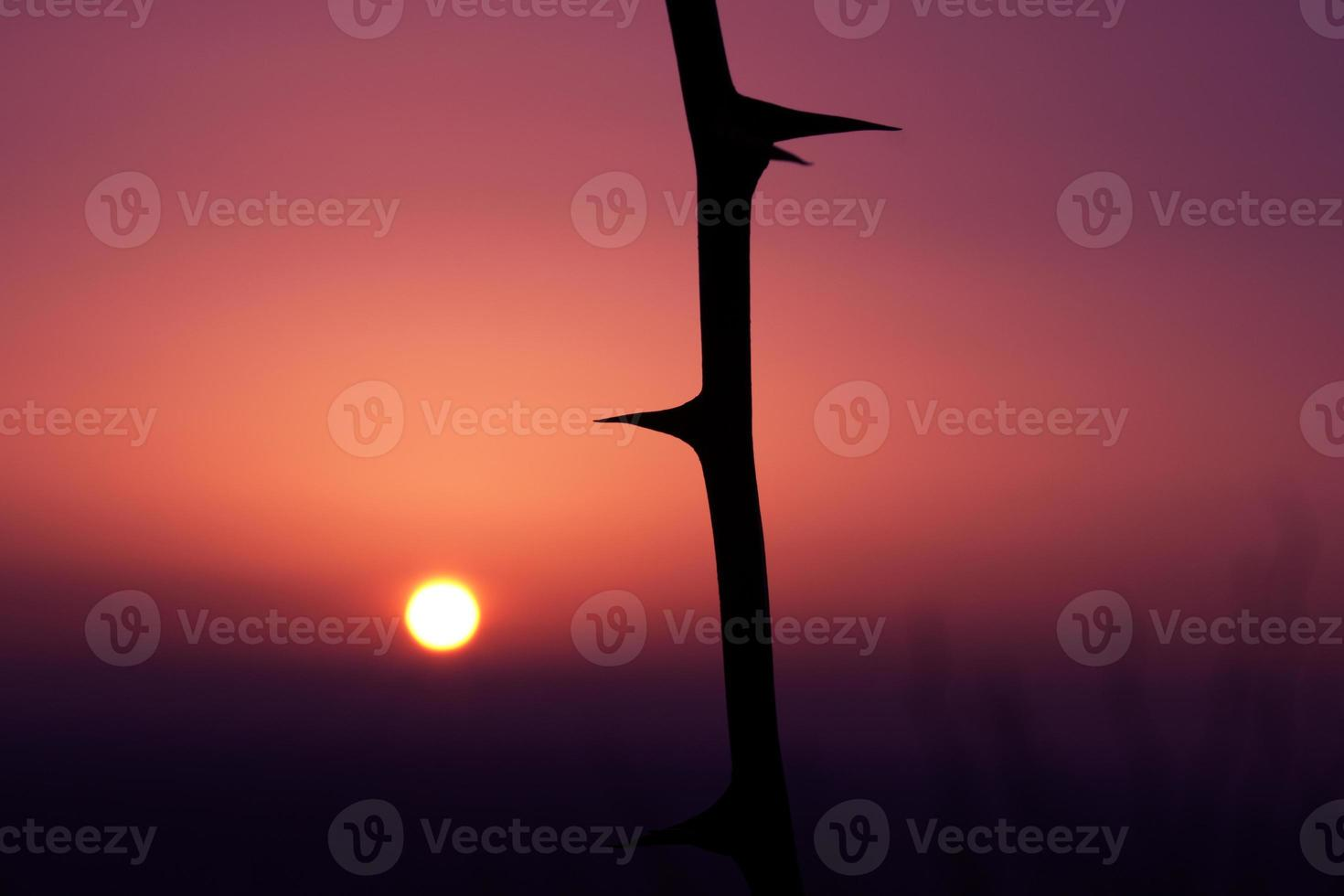 puesta de sol foto