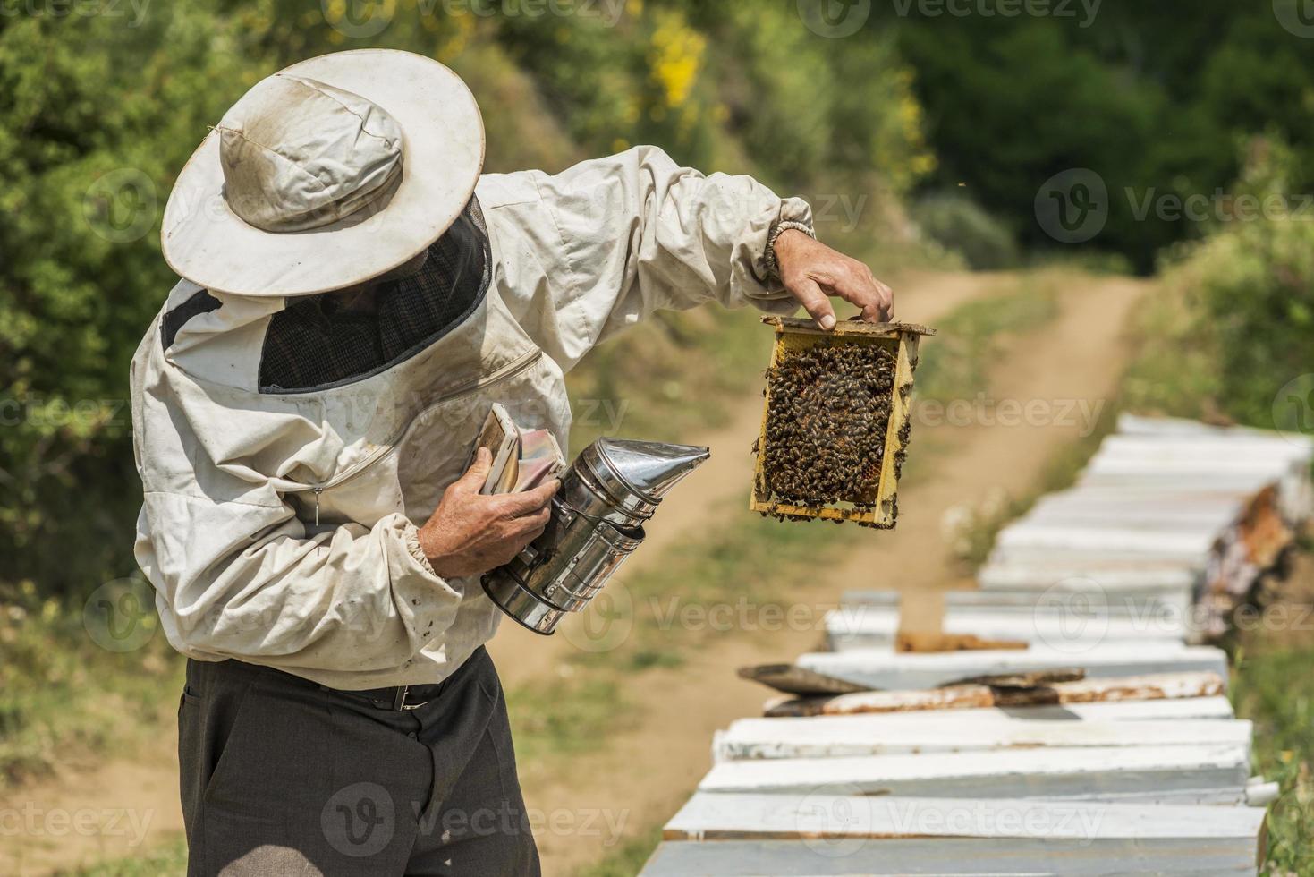 Beekeeper photo
