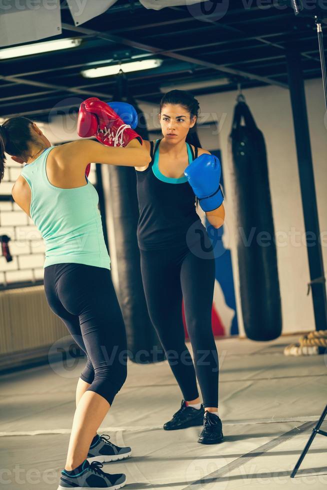 duas fêmeas sparring foto