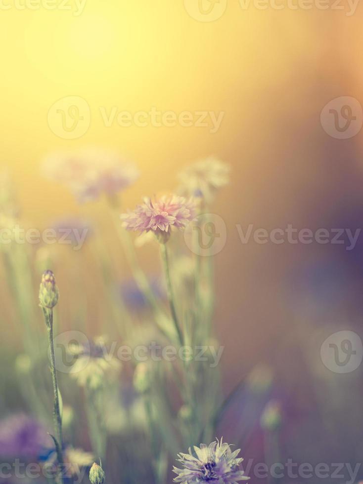 flor no pôr do sol foto