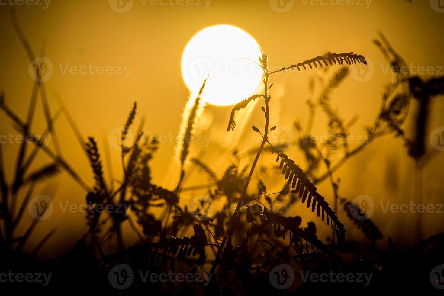 silhueta de sonho do sol foto