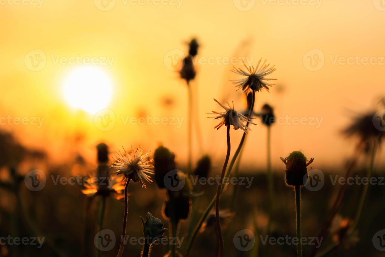 iluminado por do sol foto
