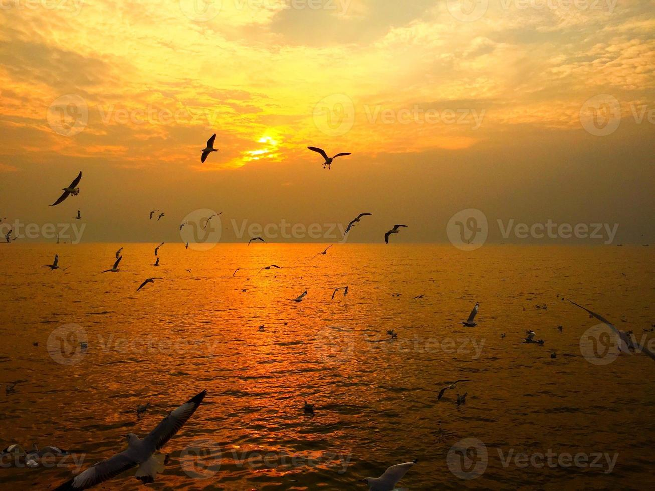 gaviota con puesta de sol foto