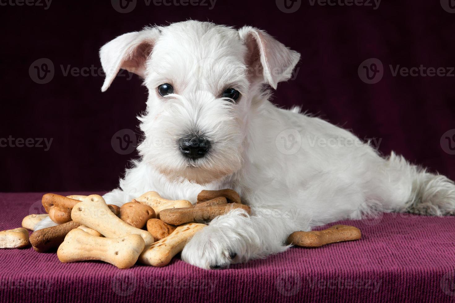 cachorro con huesos de galletas de perro foto