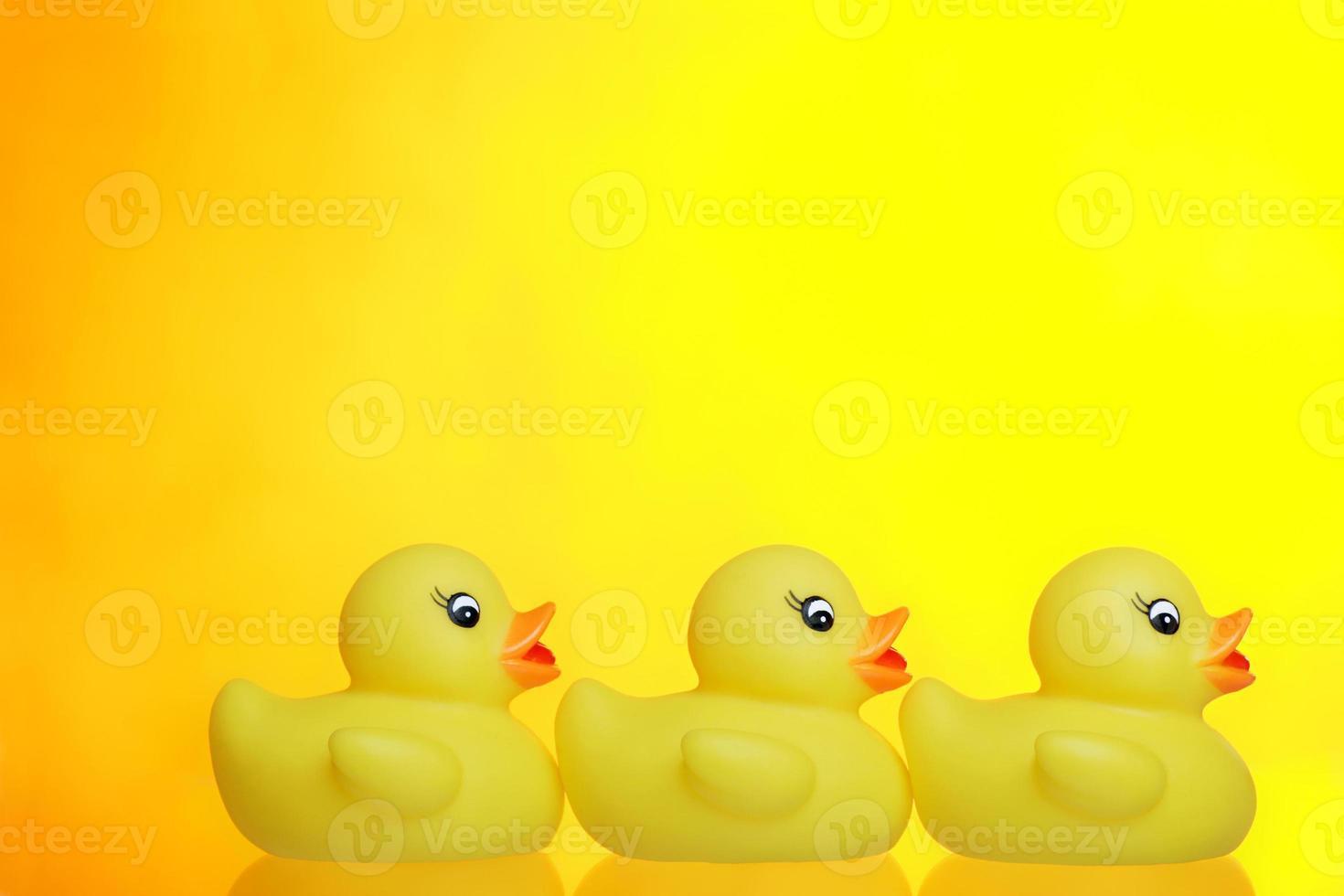 three little ducks photo